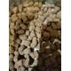 40153_Belcando-Adulte-Lamb-&-Rice-Agneau-&-Riz-pour-chien-sensible-_de_Elodie_161491586560363cfa155fc6.13634510