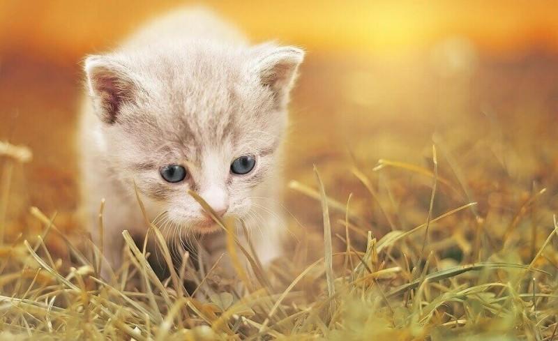 Leonardo Kitten Quality Selection pour chaton