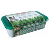 Catnip and cat grass