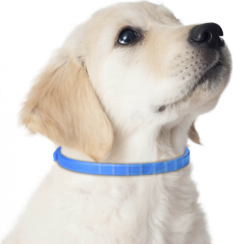 Adaptil Junior Collier anti-stress pour chiot