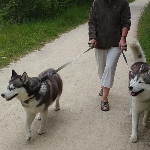 avis fabrice croquettes virbac hpm adult chiens