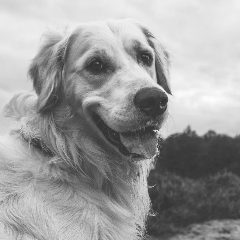 virbac hpm croquettes chiens caractéristiques