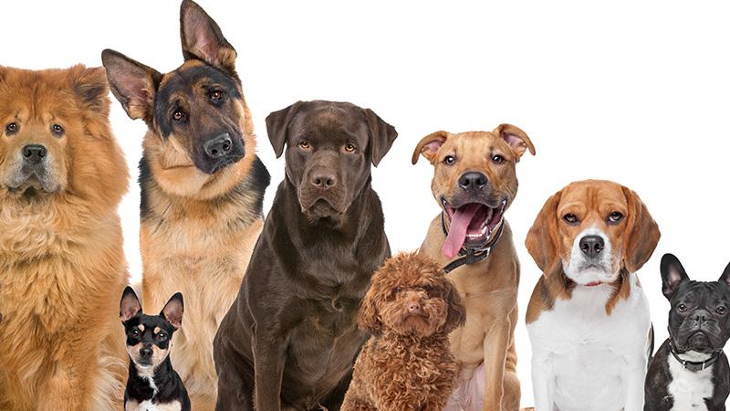 virbac hpm adult chiens pour tous