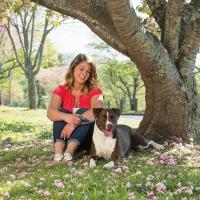 Collier de Dressage Petsafe pour petits chiens 100m de portée