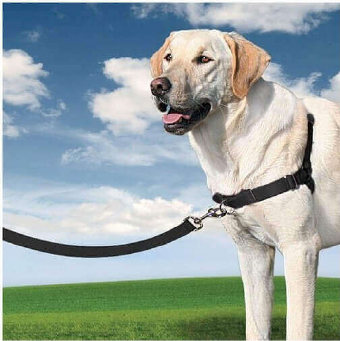 Harnais Petsafe EASY WALK 3 en 1 pour chien - 4 dimensions au choix