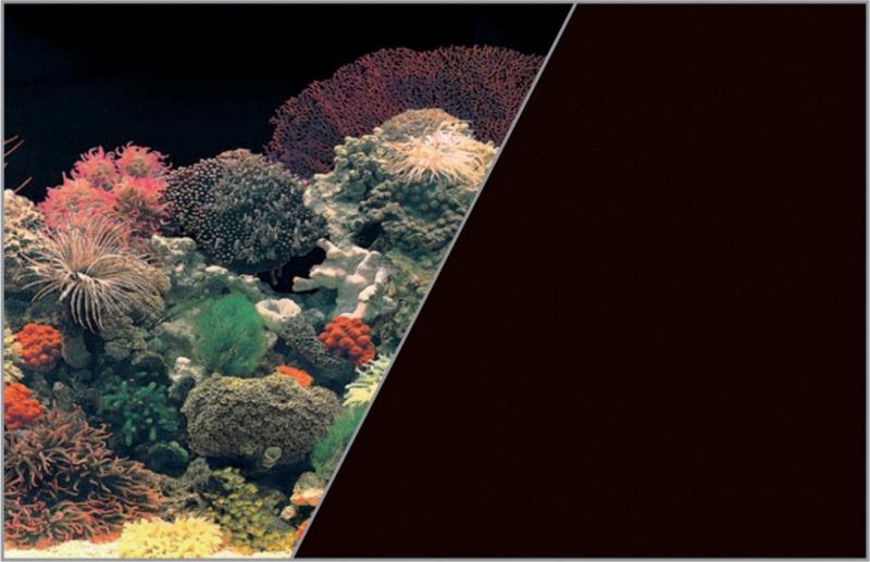 Poster fond décor pour aquarium recto corail et verso noir