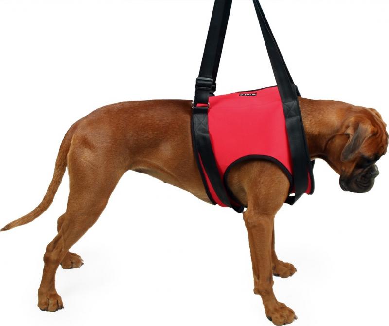 Harnais de levage pour chien Antérieur Zolia