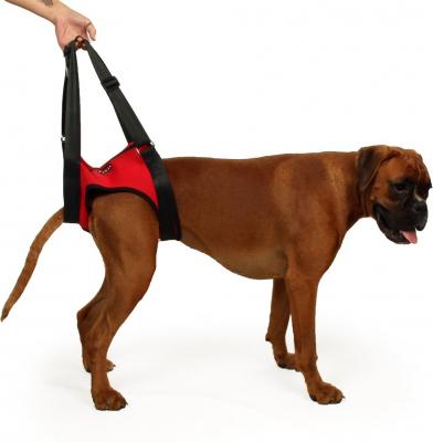 Harnais de levage pour chien Postérieur Zolia