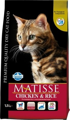 Chat adulte
