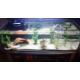 42671_Aquarium-tortue-Karapas-noir---plusieurs-tailles_de_Florence_5048824075c9cc5a60180a8.59369575