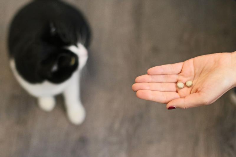 Vétocanis comprimés contre les vers pour chien et chat