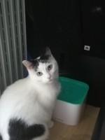 43218_Fontaine-à-eau-Zolia-Flower-Falls-pour-chats-et-petits-chiens_de_Laureen_12636697505d4e6a2f56b3a6.96631477