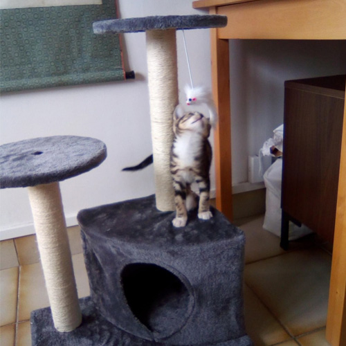 avis achille arbre chat laydie zolia