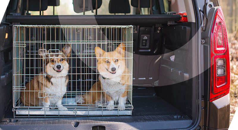 cage transport xena zolia pour chiens et chats