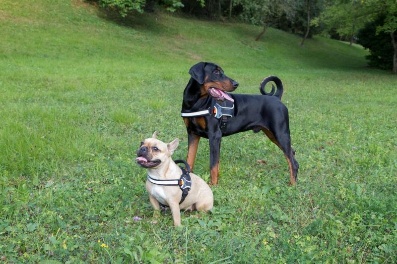 Harnais pour chien Hercules noir
