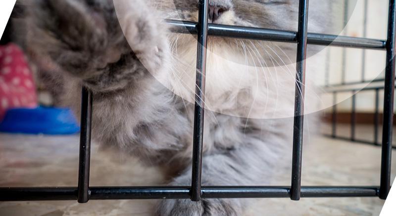 enclos modulable zolia chatons
