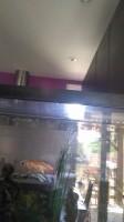 44010_Tetra-Goldfish-Gold-Colour-granulés-pour-poissons-rouges_de_claire_3873840715d1338bf72bbe4.43651061