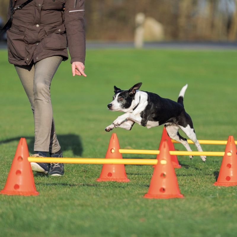 Set d'obstacle Dog Activity