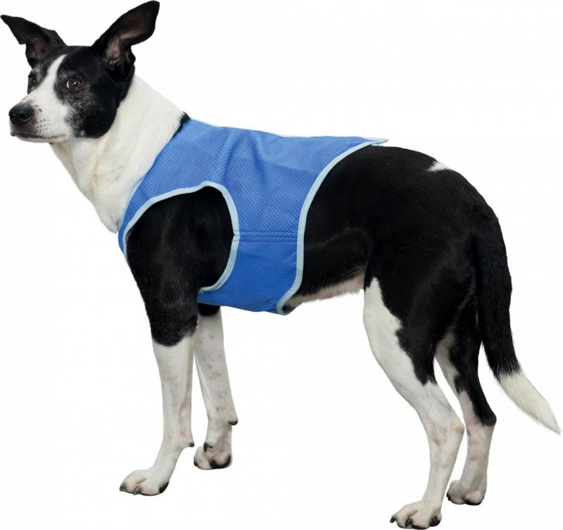 Veste rafraîchissante pour chien - Plusieurs tailles disponibles