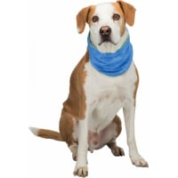 Bandana rafraîchissant pour chien - Plusieurs tailles disponibles