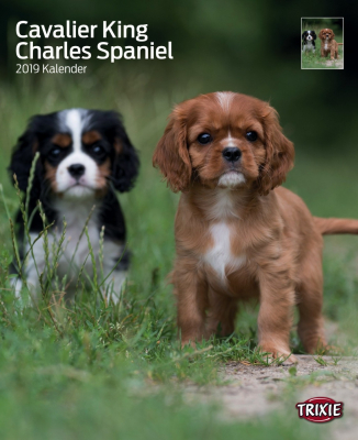 Calendrier 2019 Cavalier King Charles Spaniel