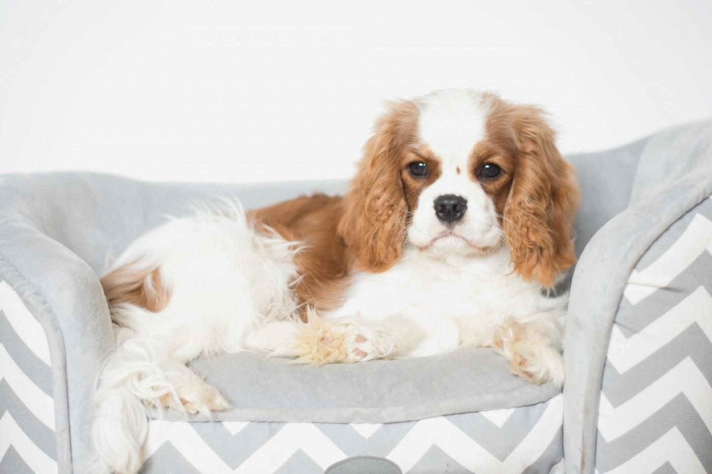 canap pour chien ou chat zolia avec pochette de. Black Bedroom Furniture Sets. Home Design Ideas