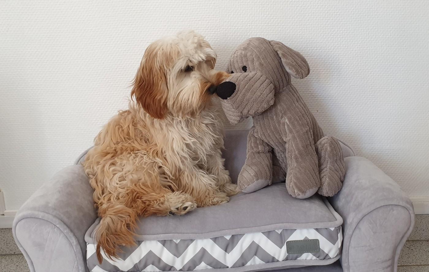 canap pour chien ou chat zolia graphique et moderne. Black Bedroom Furniture Sets. Home Design Ideas