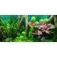 45042_JBL-Led-Solar-Natur-Lampe-LED-haute-performance-pour-aquariums-d'eau-douce_de__1314879396604bab9c64a585.82430684