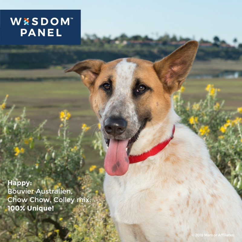 Wisdom Panel 2.0 Hunderasserkennung