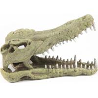 Crâne crocodile décoration pour terrarium