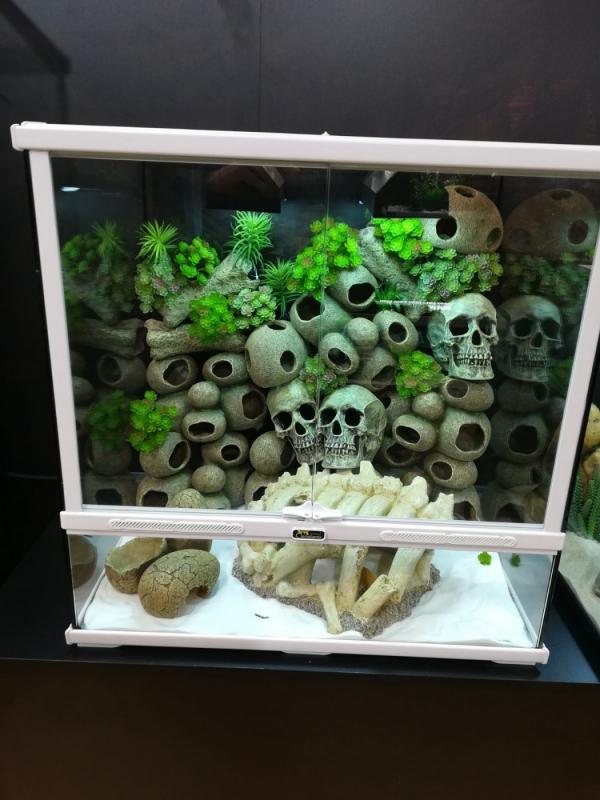 Squelette décoration pour terrarium