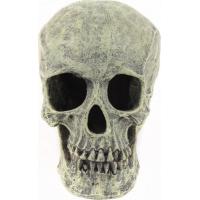 Crâne en résine décoration pour terrarium