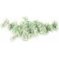 Plante verte / blanche pour terrarium