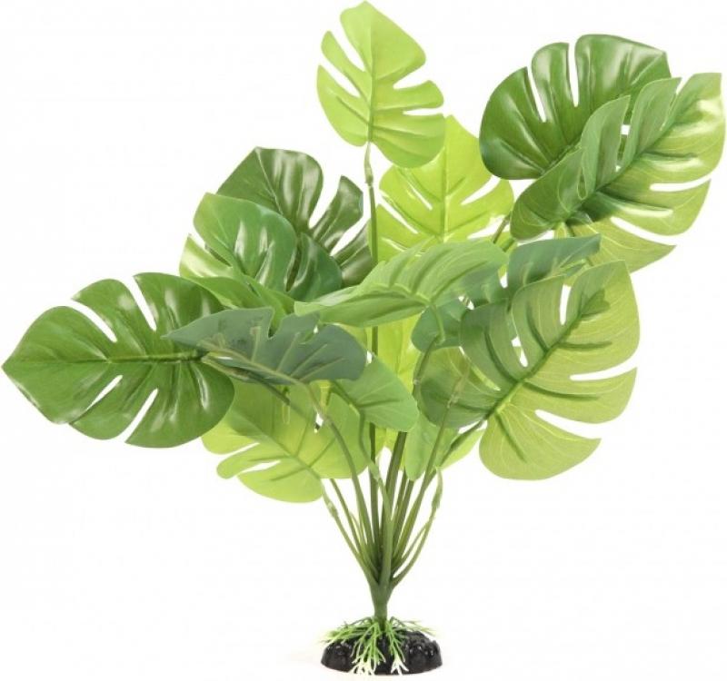 Plante verte Monstera pour terrarium