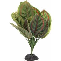 Plante au feuillage vert / rouge pour terrarium