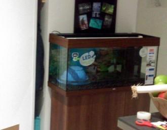 45543_Aquarium-JUWEL-Rio-180-LED-_de_Emilie_1470330325c529856b940b3.55383175