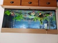 45543_Aquarium-JUWEL-Rio-180-LED-_de_GERALDINE_10655964045c4ccd0f0a96b2.31563656