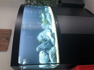45561_Aquarium-JUWEL-Vision-260-LED_de_Laurent_4470151395cf7bd21209cf3.01854688