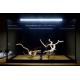 45639_Aquarium-Juwel-Primo-70-LED_de_alain_1503265504604335e4626b07.45433037