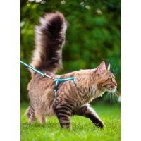 Accesorios para gato: collar, correa y arnés