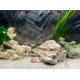 45864_Juwel-Poster-de-fond-1-pour-aquarium_de_Emmanuelle_21209872176085033bb80038.62138722