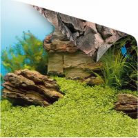 Juwel Poster de fond 1 pour aquarium