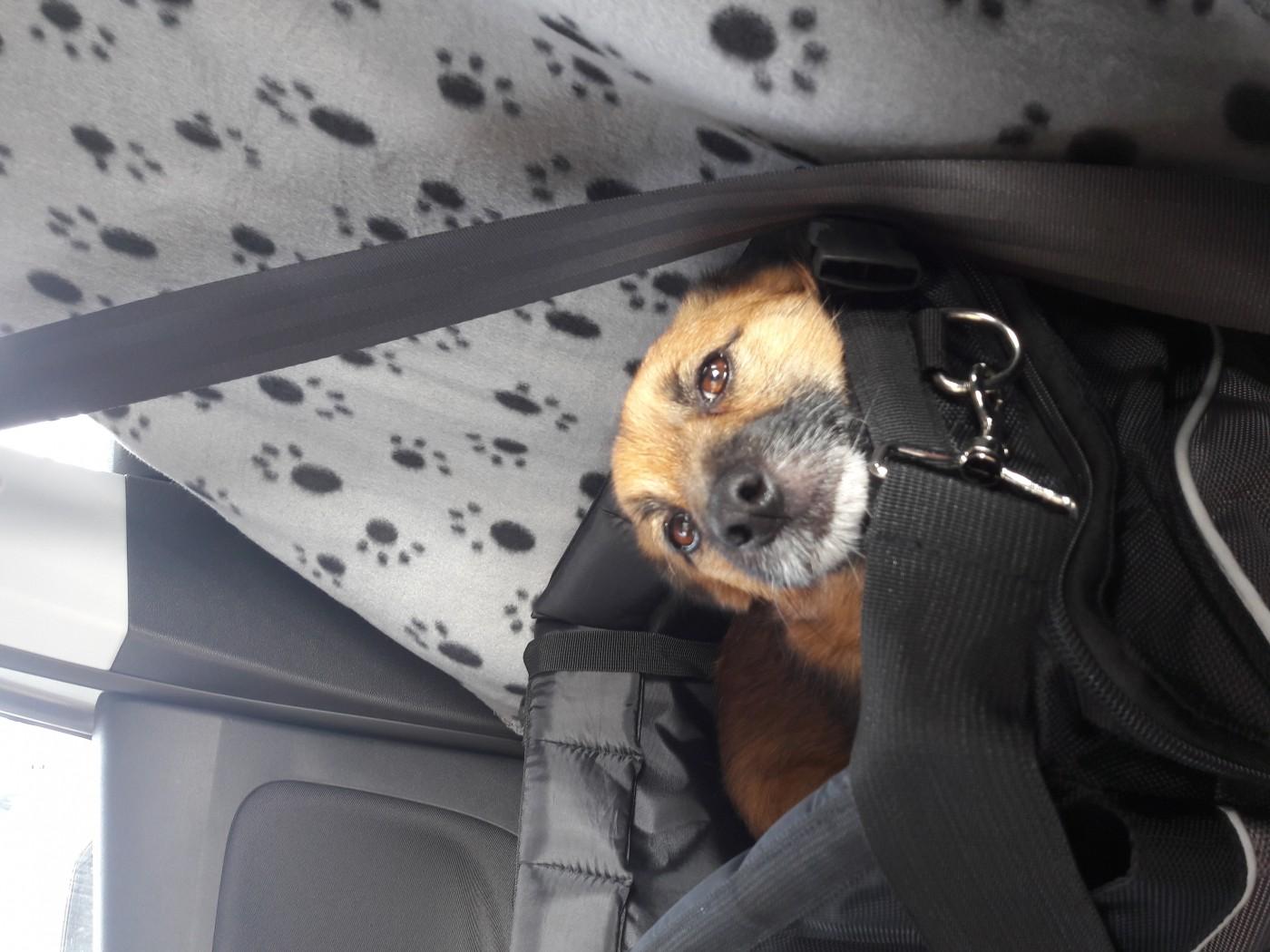 Plaid Anti Poil De Chat avis sur plaid en polaire pour chien et chat zolia makéa - 100cm
