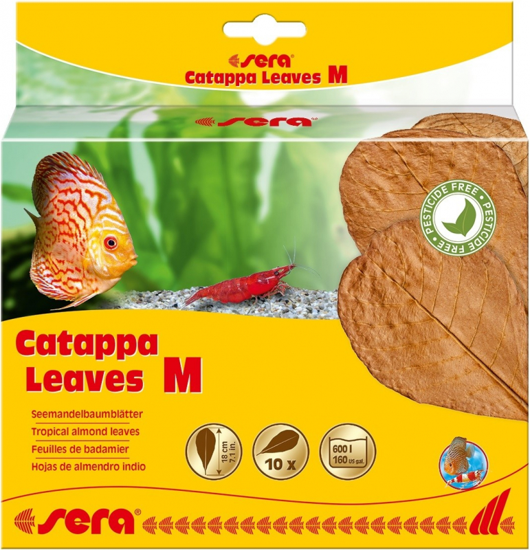 Sera Catappa Leaves Feuilles de badamier