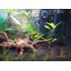 46509_Tropica-Aquarium-Soil-Substrat-complet-actif-et-naturel_de_Cyril_6216556706072bbda36c438.61584317