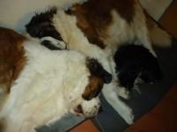 46605_Matelas-mémoire-de-forme-pour-chien-Zolia-Nixon---2-tailles-disponibles_de_NATHALIE_19123162355c6ef0d918a0a4.14641119