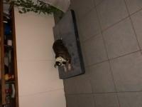 Matelas-Memoire-de-forme-pour-chien-Zolia-Nixon---2-tailles-disponibles_de_Pierre_11738139715c3dcf1853e208.33750431