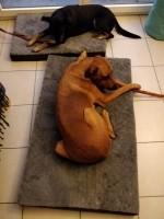 Matelas-memoire-de-forme-pour-chien-Zolia-Nixon---2-tailles-disponibles_de_Jeanne_14156115385c6a8ea615d2b8.90007332