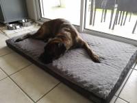 Matelas-memoire-de-forme-pour-chien-Zolia-Nixon---3-tailles-disponibles_de_Malo_2053092805db75559d96ab7.74881151