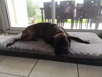 Matelas-memoire-de-forme-pour-chien-Zolia-Nixon---3-tailles-disponibles_de_Malo_7146672905db7552b873e41.45294870